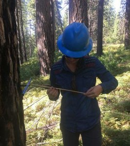 UC Davis researcher Christina Restaino examines a tree core in a Sierra Nevada forest in 2016. Photo: Courtesy Christina Restaino/UC Davis