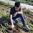 """Student volunteer at Soil Born farms"""