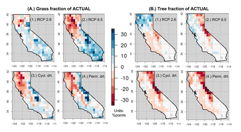 Study Figure 1: Grassland (A) and forest (B) retreat or expansion in response to 21st century climate changes. Blue indicates expansion; red indicates contraction. Forests retreat in all future climates except those associated with aggressive emissions reductions (RCP 2.6)