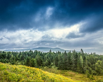 A boreal coniferous forest