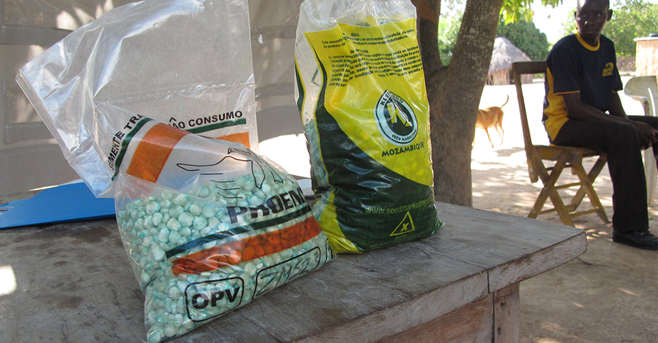 Bags of drought-tolerant maize seed available for sale to farmers in Mozambique. (Jonathan Malacarne/AMA Innovation Lab)