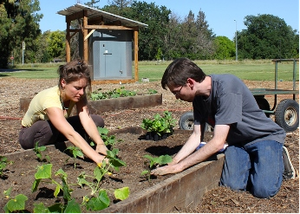 Horticulture Innovation Lab