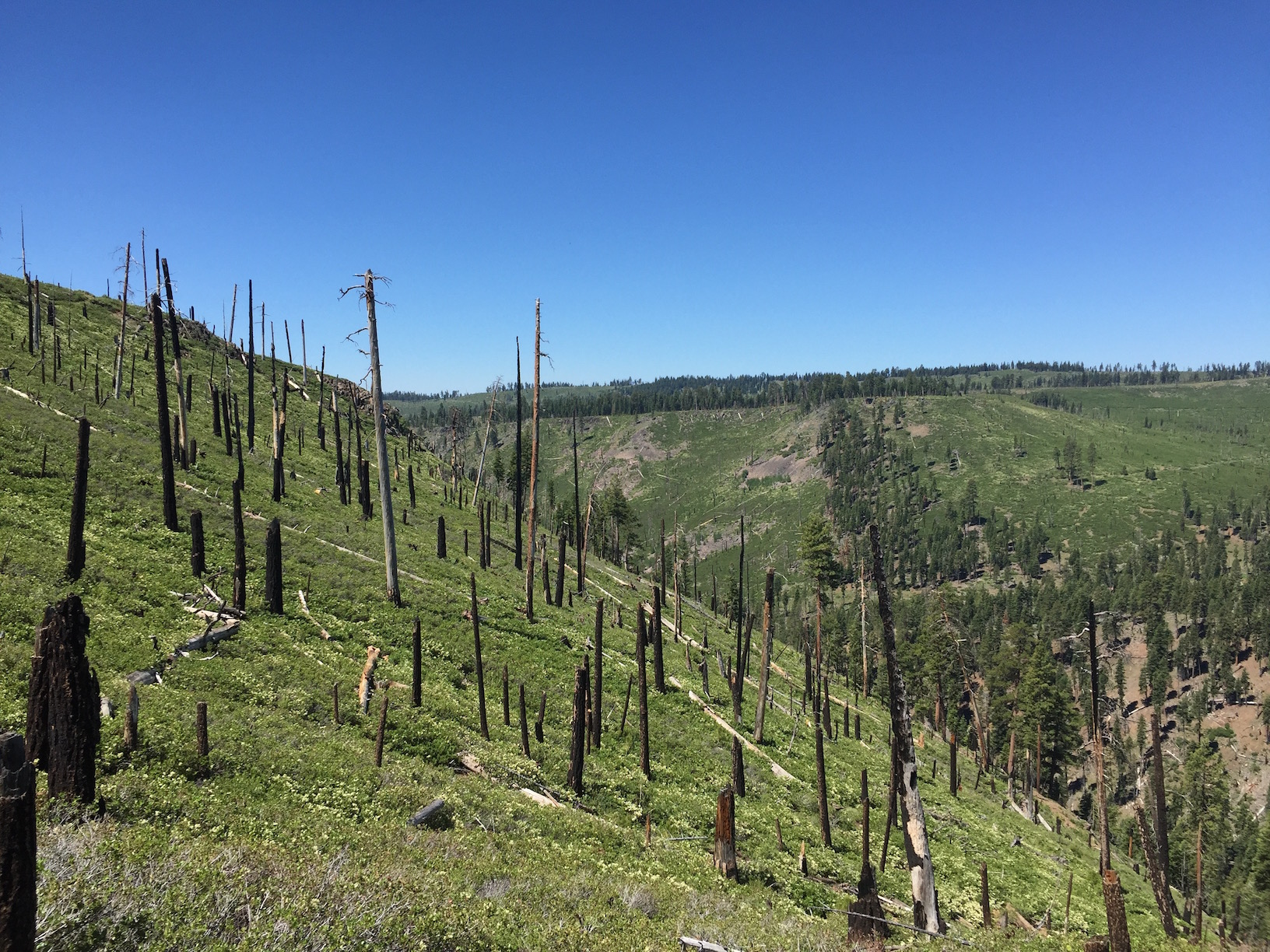 This post-fire landscape in the Warner Mountains remains deforested 16 years after the Blue Fire. (Jesse Miller/UC Davis)