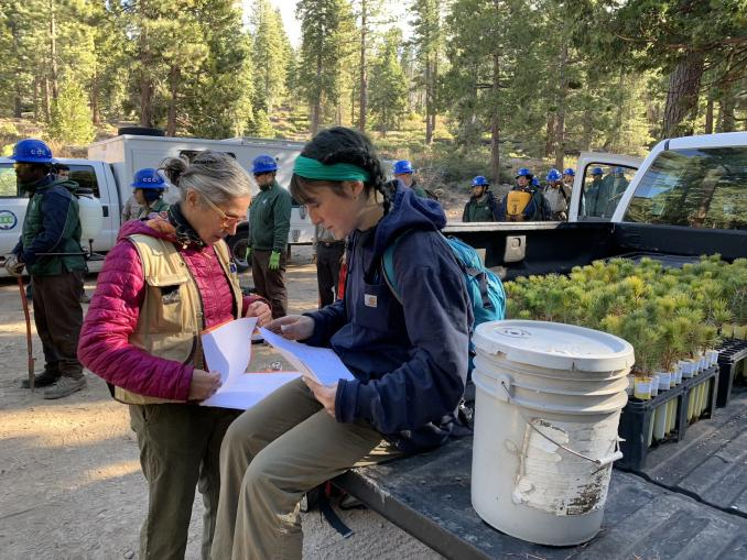 UC Davis scientists and California Conservation Corps members prepare to plant sugar pine seedlings in Tahoe National Forest, November 6, 2019. (Kat Kerlin, UC Davis)