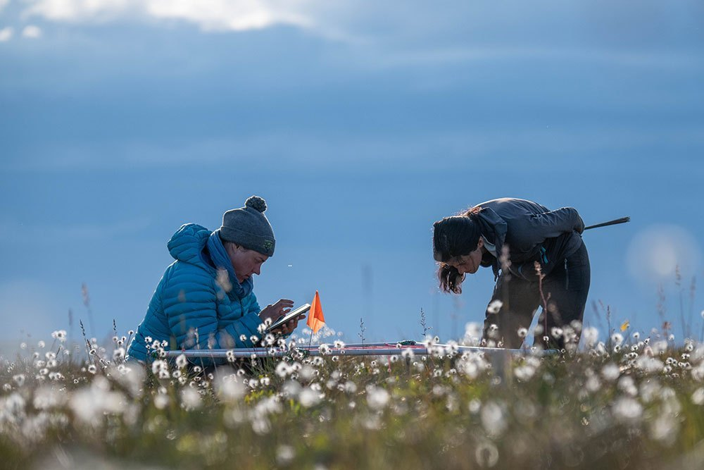 Meticulous on-the-ground observations provide critical insights into how tundra vegetation is changing. (Jeffrey Kerby/National Geographic Society)