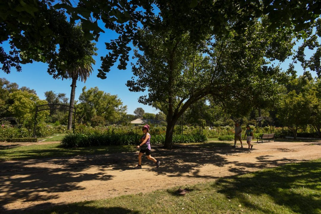 People stroll through McKinley Park in Sacramento. The city's tree canopy shades about 20 percent of its land, but tree canopy distribution varies widely among neighborhoods. (Gregory Urquiaga/UC Davis)