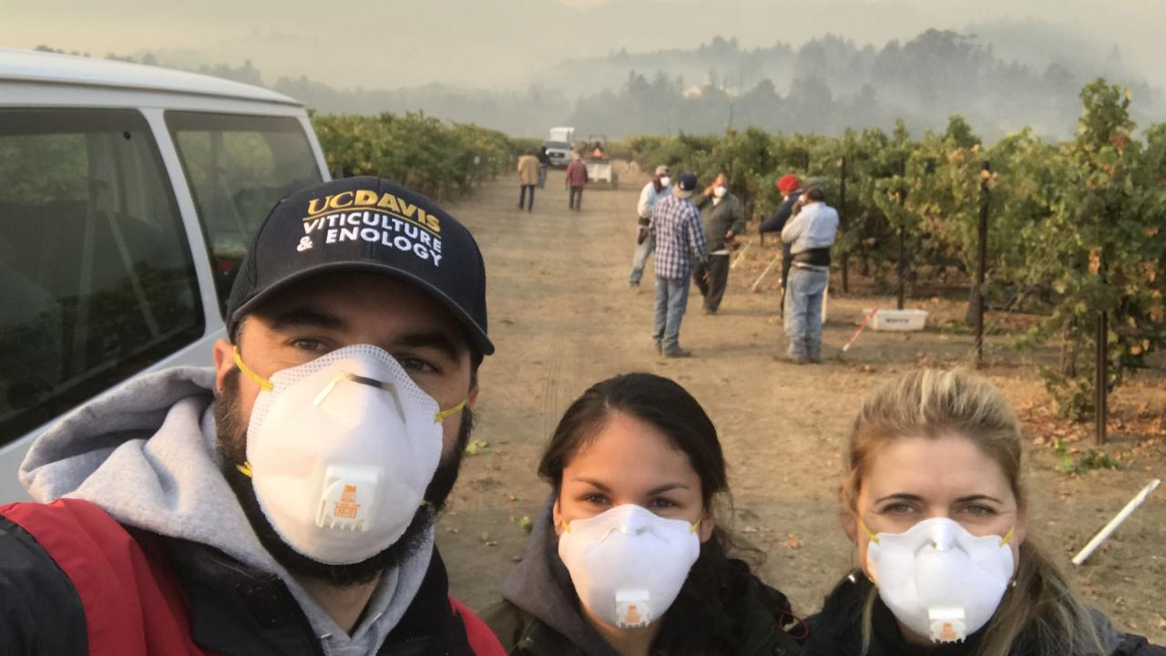 Harvesting Cabernet Sauvignon grapes at Oakville Experimental Station under smoky conditions in 2017. From left to right are Ph.D. student Raul Girardello, M.S. student Arran Rumbaugh and Anita Oberholster, cooperative extension specialist in the Department of Viticulture and Enology. (Photo courtesy Anita Oberholster)
