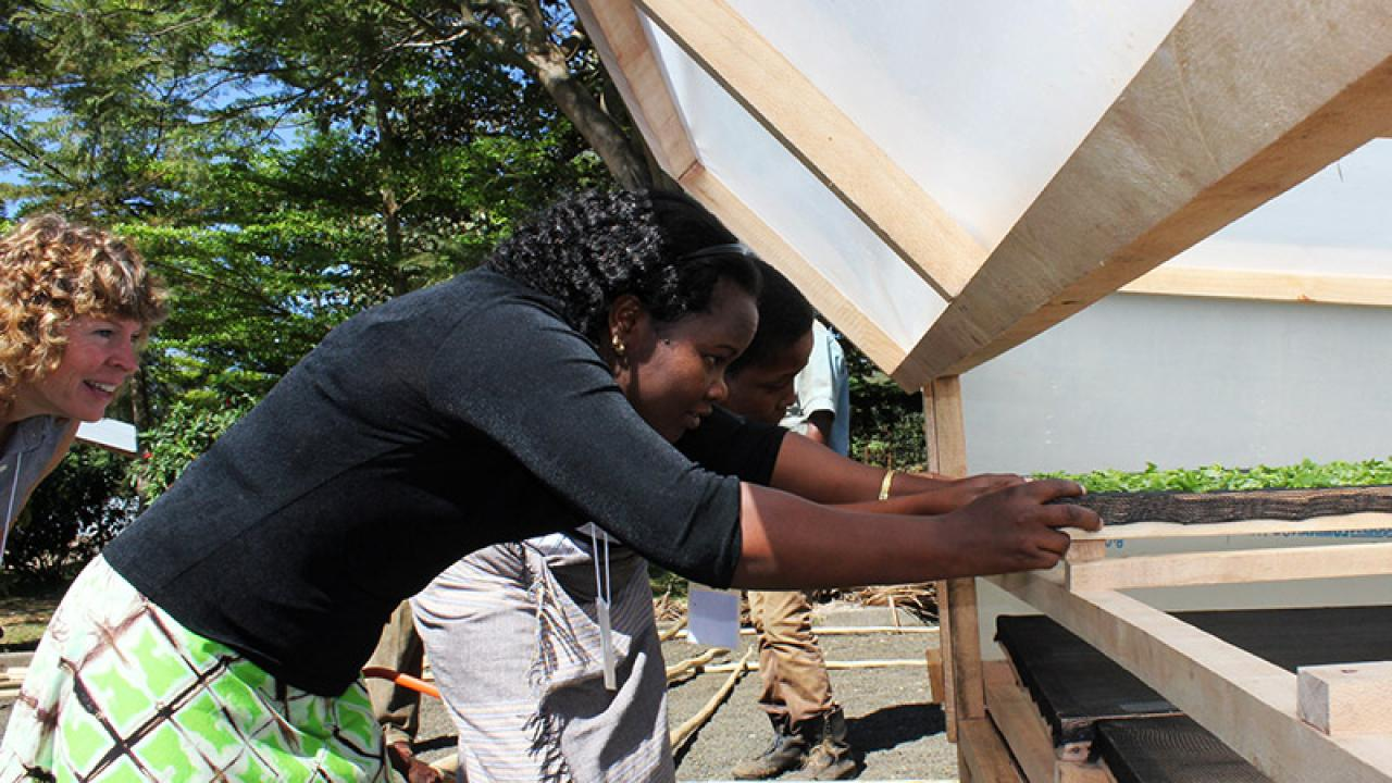 Diana Barrett of UC Davis, left, watches as Noel Makete of Kenya and Pendo Bigambo of Tanzania slide amaranth leaves into a solar dryer for a demonstration of postharvest practices. (Photo: Amanda Crump | UC Davis)