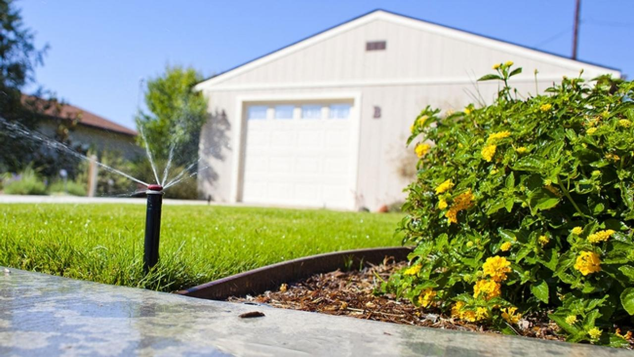 After rainfall, turn off your automatic sprinklers to conserve water. (photo: UC ANR)