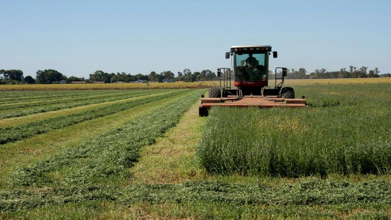 Alfalfa harvester. (photo: John Stumbos / UC Davis)