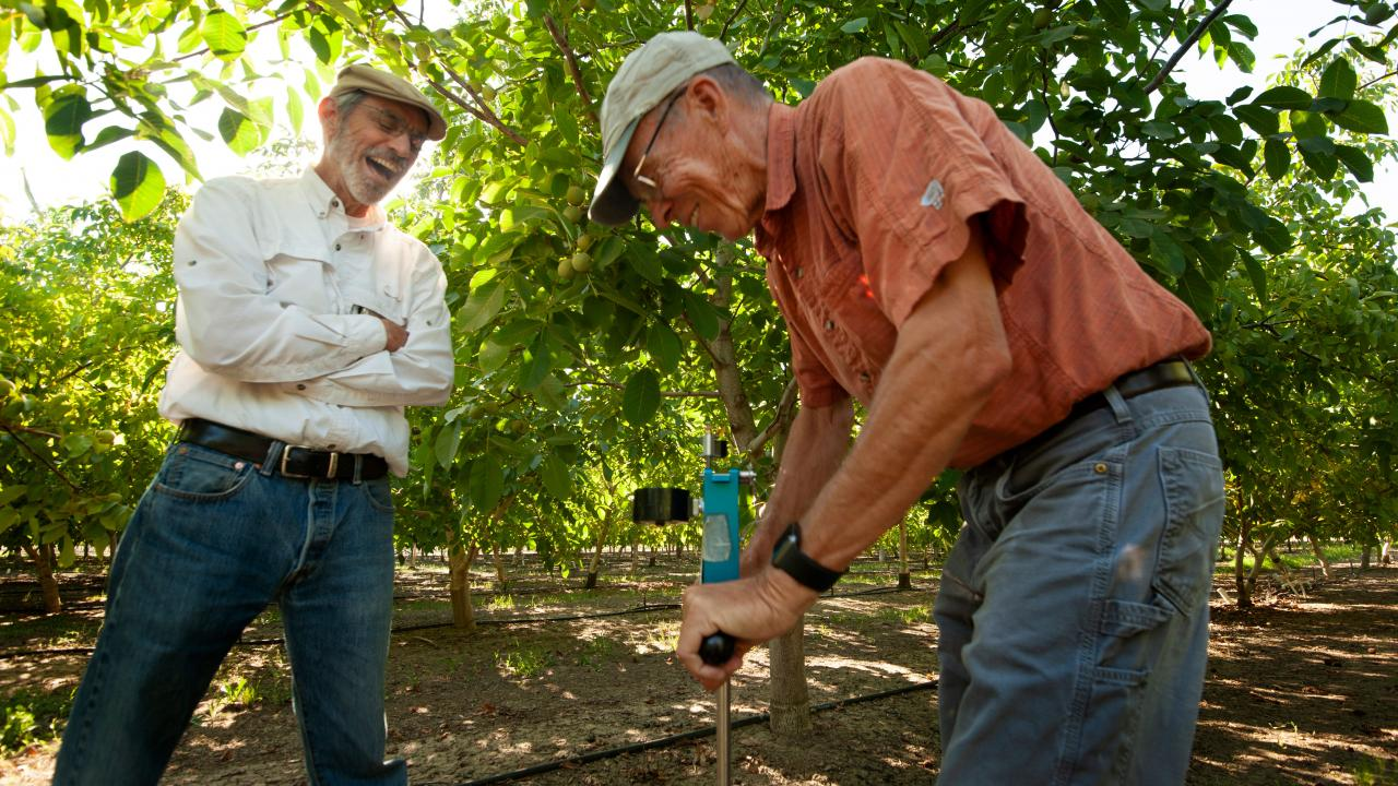 Professor Ken Shackel (left) and Cooperative Extension Specialist Bruce Lampinen demonstrate how pressure chambers can gauge a tree's water needs.