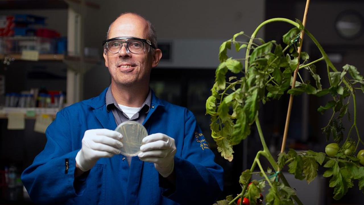 Johan Leveau, a professor in the Department of Plant Pathology, holds a plate containing Cal35, an anti-fungal microbe found in soils from the Jug Handle State Natural Reserve. The microbe shows promise for the agriculture industry, but previous state law did not allow the commercialization of materials from state parks. (UC Davis photo)