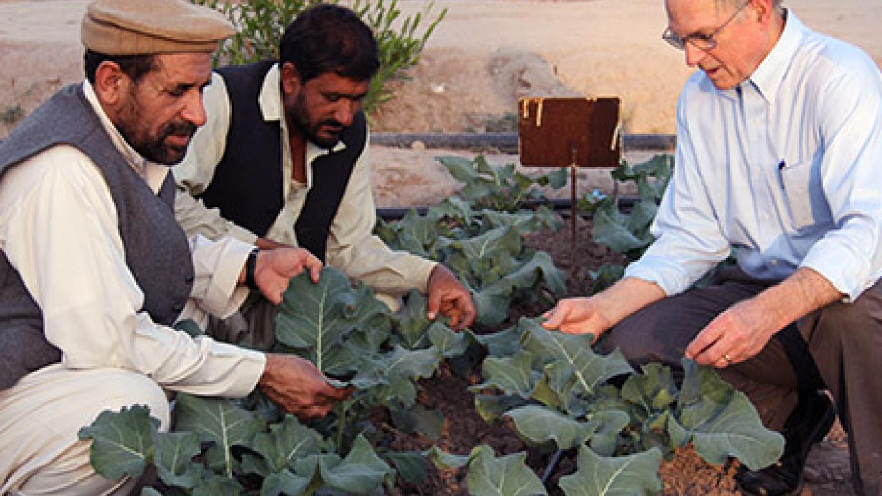 Jim Hill, right, associate dean for International Programs in the College of Agricultural and Environmental Sciences at UC Davis, discusses crop health with two Afghan agriculturists. (Courtesy UC Davis/International Programs)