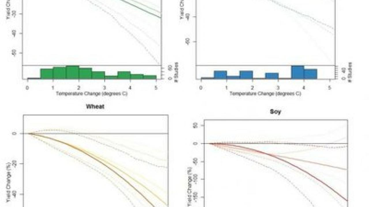 Impacts of temperature change on yields of four major crops. (Courtesy UC Davis)