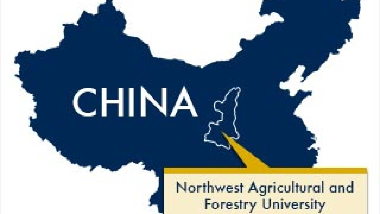 UC Davis will be partnering with Northwest Agricultural and Forestry University in Yangling, Shaanxi. (Tom Watts/UC Davis graphics and China map from Wikimedia Commons)