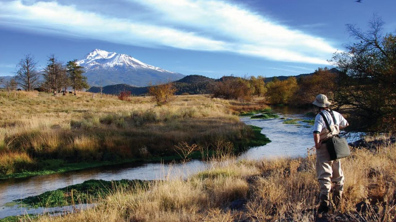 The Nature Conservancy's Shasta Big Springs Ranch on the Shasta River (above) is the site of a long-term restoration and research project. UC Davis scientists are studying spring-fed rivers like the Shasta that provide crucial habitat for salmon and other species.