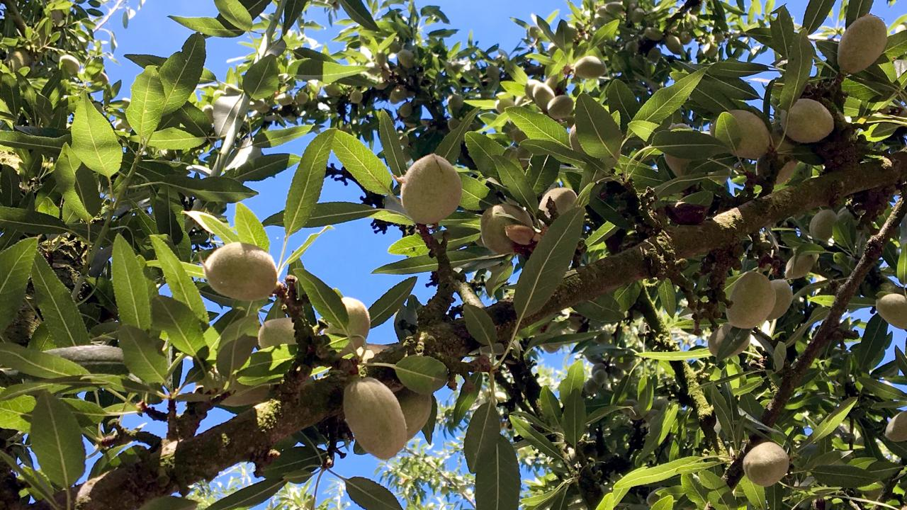 Researchers are partnering with almond growers to measure the complete nitrogen cycle--what goes in and what goes out.