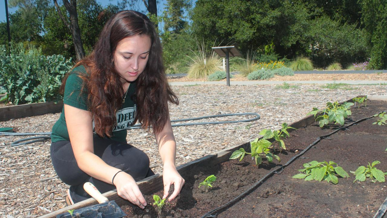 UC Davis student Elise Brockett plants vegetable seedlings at the Horticulture Innovation Lab Demonstration Center this spring. A few extra raised beds are waiting for contest winners' bright ideas. (Brenda Dawson/UC Davis)