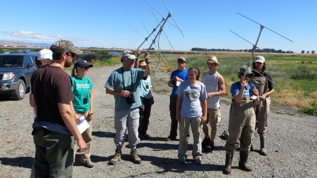 Wildlife, Fish and Conservation Biology students learn to use radio telemetry to track nesting birds in Suisun Marsh.