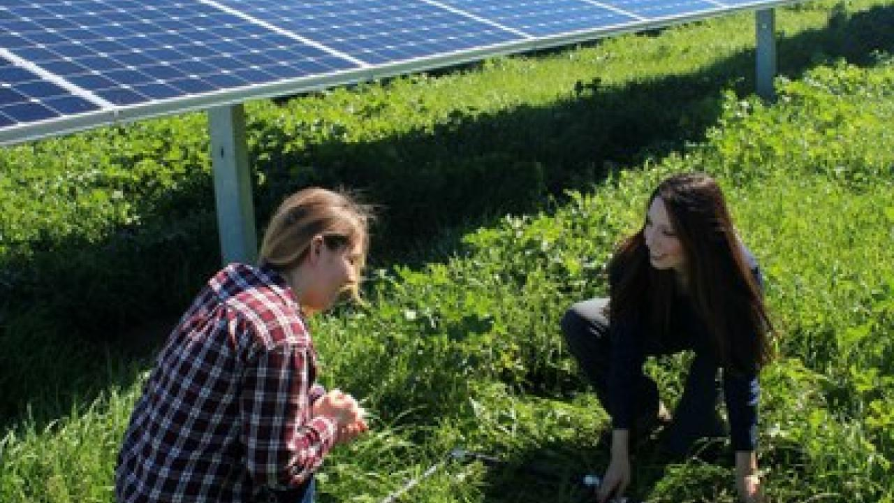 solar panels and researchers