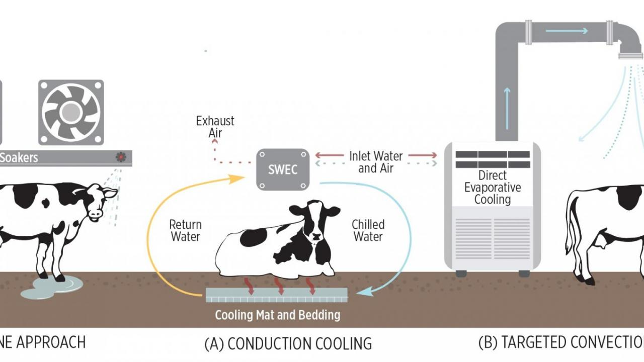 Infographic: Cow Cooling Approaches