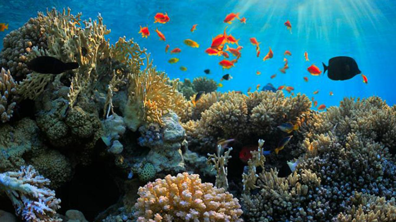 Fish help coral reefs by eating algae that can kill coral and dominate reefs if left unchecked. Photo: Getty Images