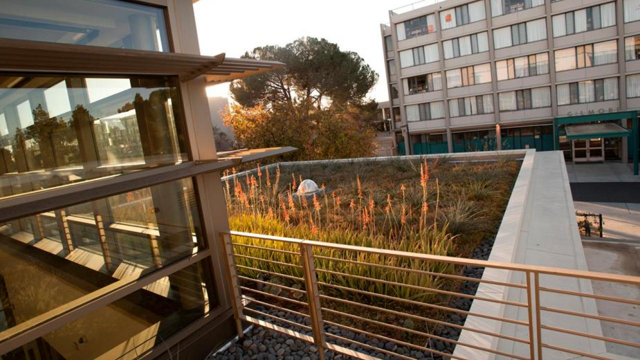 Our green campus includes rooftop gardens like this one, at the LEED-platinum Segundo Services Center. Rooftop plots absorb sunlight that would otherwise be converted to heat energy, provide extra insulation and capture rainwater, thus reducing storm runoff. (Gregory Urquiaga/UC Davis)