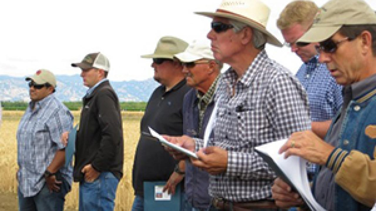 Growers participate in a field day at UC Davis, 2013. (photo: Ann Filmer/UC Davis)