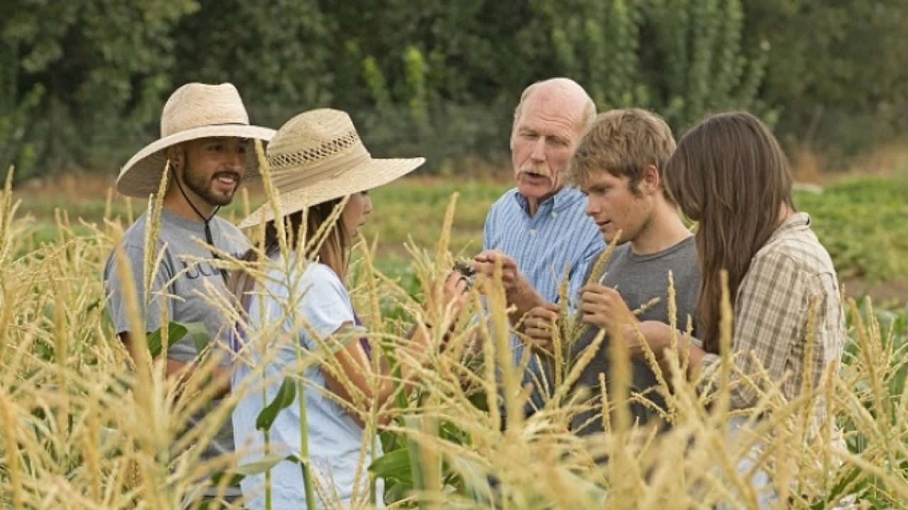 UC Davis Student Farm Director Mark Van Horn (center) in August 2015 talks about corn pests with students (left to right) Michael Bancroft, Alexis Fujii, Abraham Cazares, and Mary Laurie. Gregory Urquiaga/UC Davis