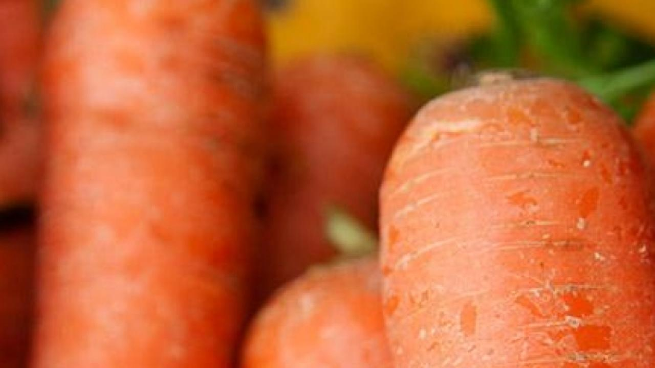 Genome sequencing reveals how carrots have become good at accumulating carotenoids, the pigment compounds that give them their characteristic colors and nutritional richness. (Gregory Urquiaga/UC Davis)