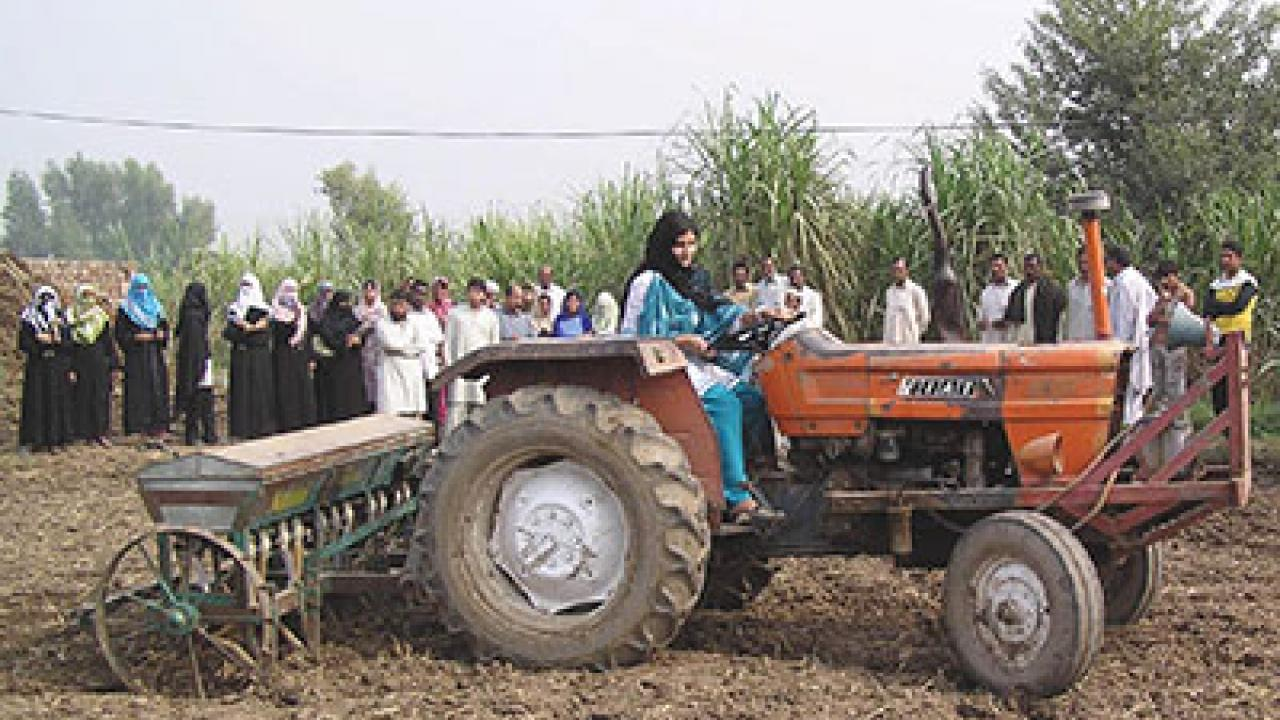 Agriculture, including vegetables, grain and fruit crops, is the largest sector of Pakistan's economy. (UC Davis International Programs courtesy photo)