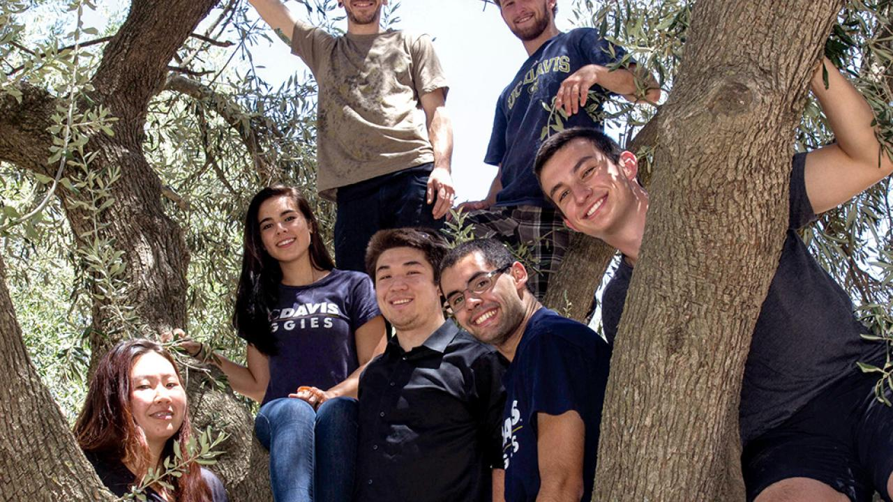 This team of bright UC Davis students won a major award and the praise of industry for a portable device that can quickly assess olive oil quality. (Photo courtesy James Lucas | UC Davis)