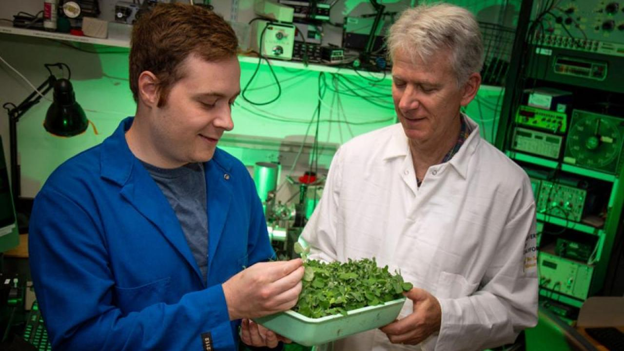 Ph.D. student Philip Day and Professor Steven Theg, Department of Plant Biology, work on protein sorting in plant chloroplasts. (David Slipher/UC Davis)