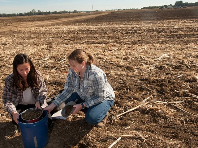 Two students sift soil as they work together during Soil Science 100 class at Russell Ranch.