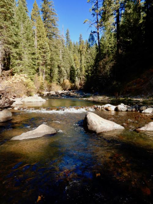 Mill Creek, a spring-fed creek that flows from the base of Mt. Lassen to the Sacramento Valley, is an important cold-water stream. (Ann Willis/UC Davis)