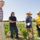 Professor Charlie Brummer, director of the UC Davis Plant Breeding Center, and students Randi Jimenez, Saarah Kuzay, and Mengyuan Xiao, study a new breed of pepper growing in the UC Davis Student Farm.