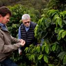 Farmer Jay Ruskey, left, worked with UC Davis geneticist Juan Medrano to collect genetic material from coffee trees on his land in north of Santa Barbara.