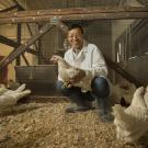 UC Davis Animal Science Professor Huaijun Zhou with white leghorn chickens.