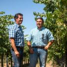 In collaboration with UC Davis Cooperative Extension viticulture specialist Kaan Kurtural (right), Miguel Guerrero (left) of The Wine Group is experimenting with Cabernet Sauvignon vines and other varieties elevated by a single wire at 66 inches.