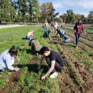 Our students spent part of a Saturday in early November helping out at Soil Born Farms in the Sacramento area.