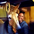 Action Jackson was a favorite of new UC Davis Horse Barn manager Amy McLean, who has a lifelong interest in donkeys and mules.