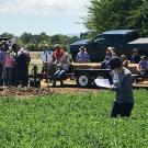Farmers and crop advisers learned how to control alfalfa weevils and so much more at Alfalfa Field Day at UC Davis.