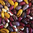 Legumes are a good source of protein, and they enrich the environment, too. Photo/Travis Parker