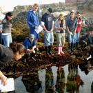 UC Davis students study tide pools and other facets of the coastal environment at the Bodega Marine Laboratory.