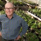 Professor Steve Knapp, director of the UC Davis Strawberry Breeding Program, and his team are using genetic and genomic experise to augment traditional breeding.