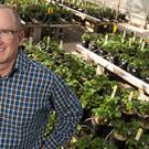 Professor Steve Knapp, director of the UC Davis Public Strawberry Breeding Program, will lead a team of scientists from UC Davis, UC Santa Cruz, UC Riverside, UC Agricultural and Natural Resources, Cal Poly San Luis Obispo, and the University of Florida.