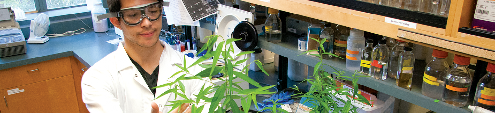 Student growing plants in a lab