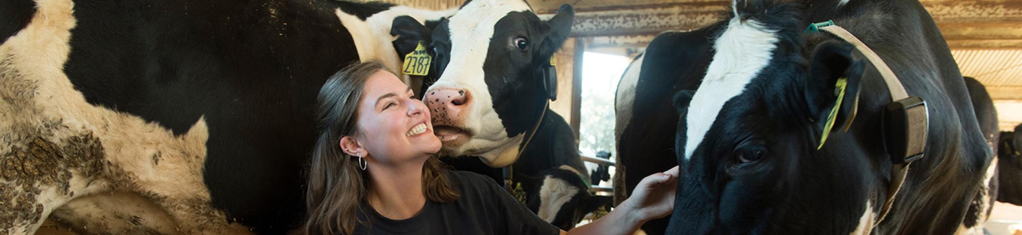 Student in the dairy barn with cows